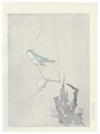 Bush Warbler and Blossoming Plum Tree by Shin-hanga & Modern artist (not read)