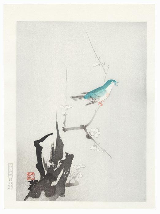 Bush Warbler and Blossoming Plum Tree by Shin-hanga & Modern artist (not read)