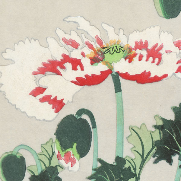 Poppies by 20th century artist (not read)