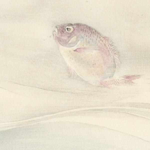 Red Sea Bream by Gekko (1859 - 1920)