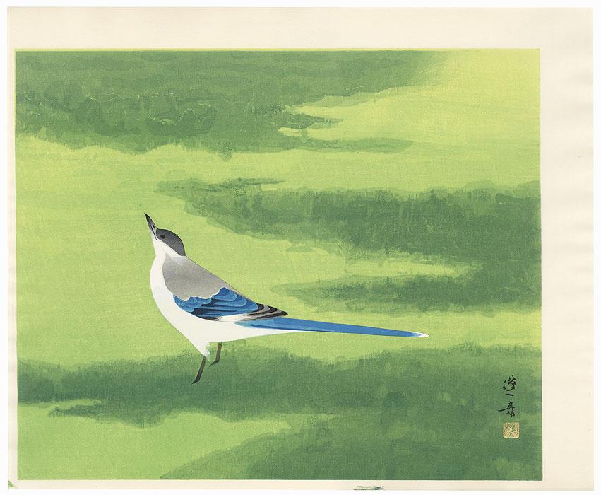 Azure-winged Magpie by Hoshun Yamaguchi (1893 - 1971)