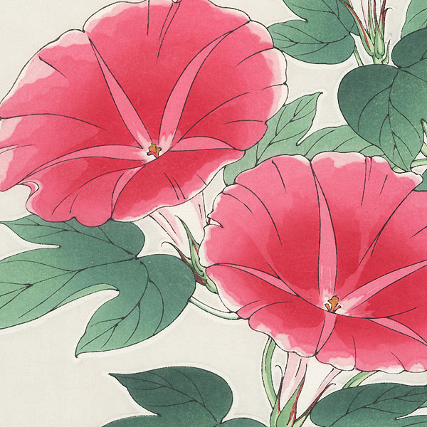 Pink Morning Glories by Kawarazaki Shodo (1889 - 1973)