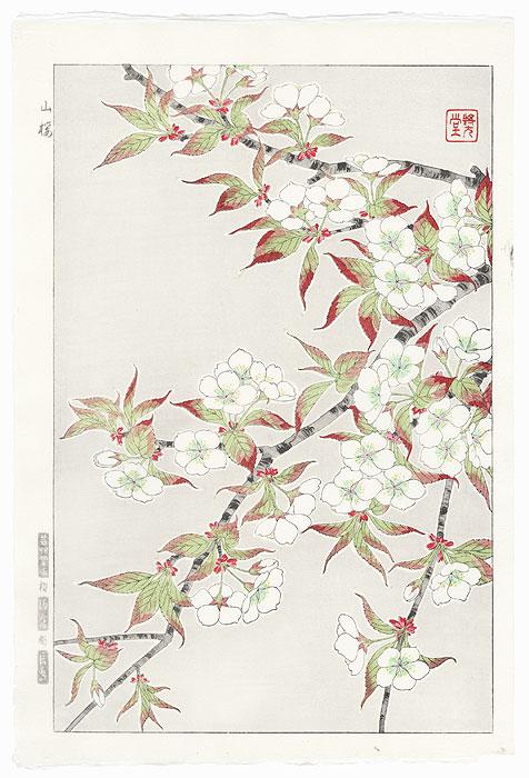 Mountain Cherry by Kawarazaki Shodo (1889 - 1973)