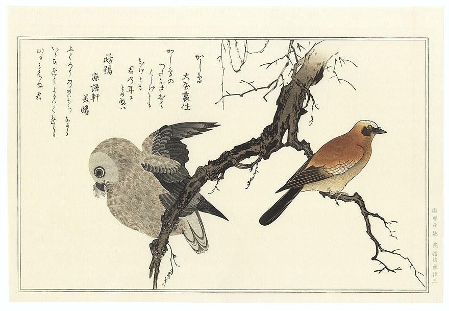 Jay and Boreal Owl by Utamaro (1750 - 1806)