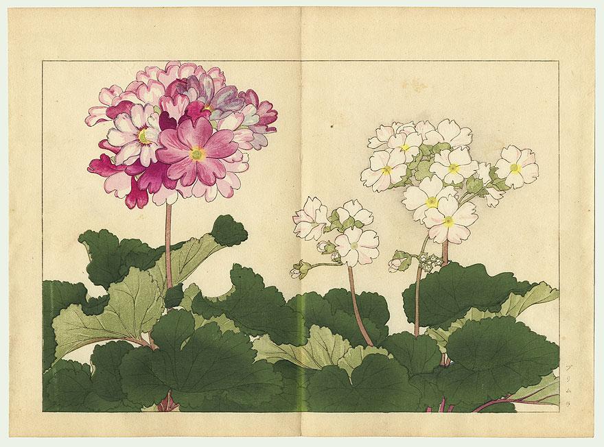 Primula by Tanigami Konan (1879 - 1928)