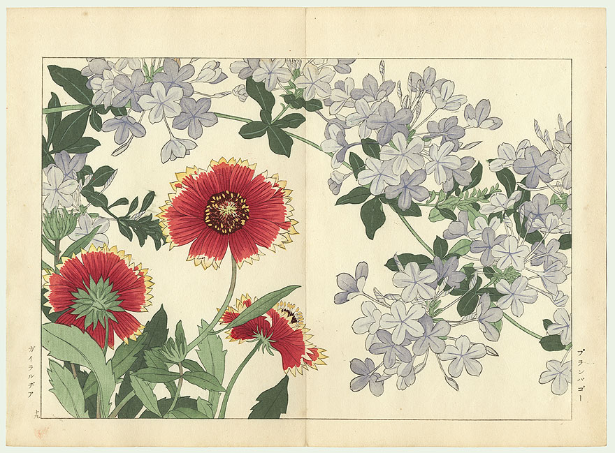 Plumbago and Gallardia by Tanigami Konan (1879 - 1928)