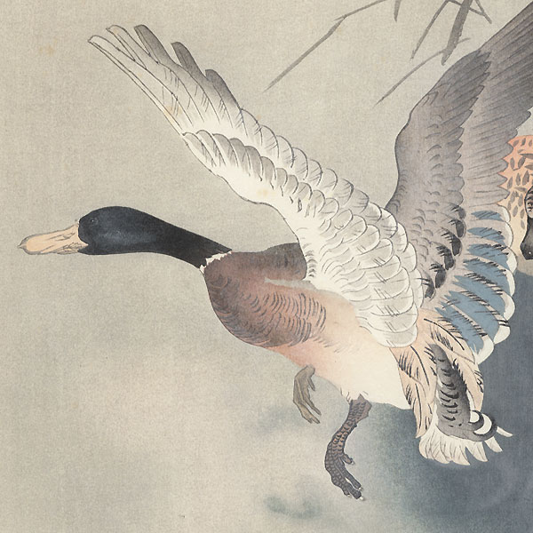 Two Ducks and Reeds by Ohara Koson (Shoson) (1877 - 1945)
