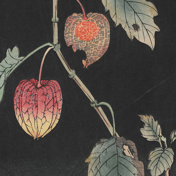 Chinese Lantern (Ground Cherry) by Jo (Hashimoto Yuzuru) (active 1920s - 1930s)