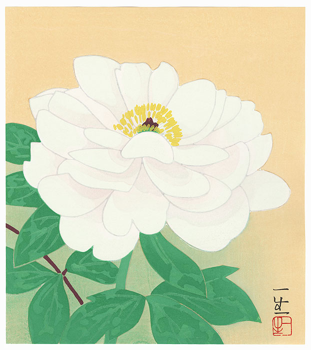 White Tree Peony by Contemporary artist (not read)