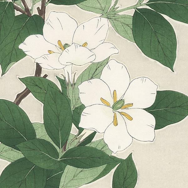 White Blossoms by Kawarazaki Shodo (1889 - 1973)