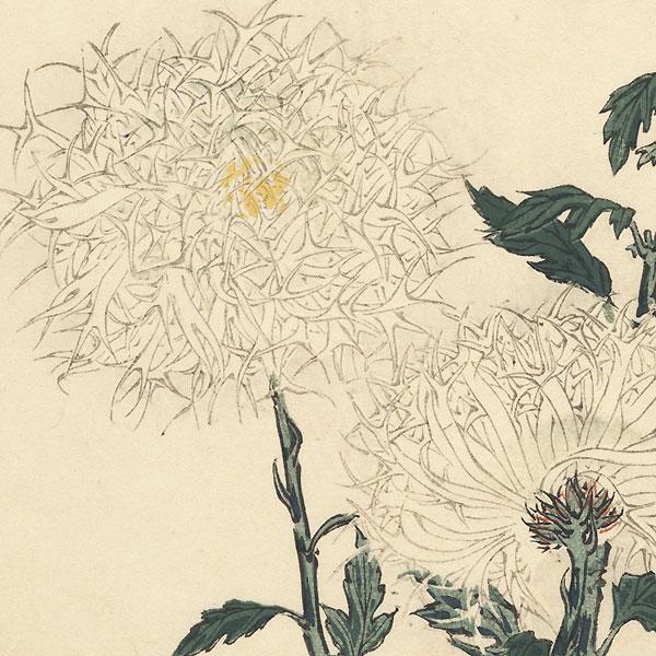 Feathery Crane Chrysanthemum by Keika Hasegawa (active 1892 - 1905)