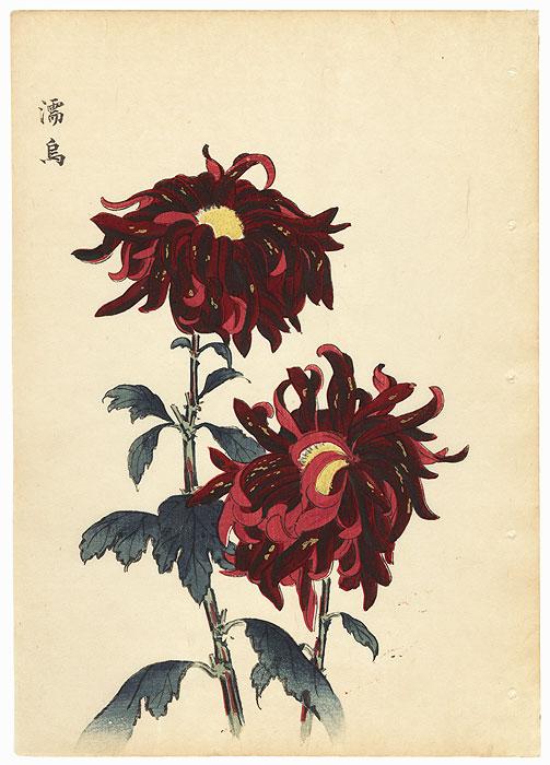 Crimson Chrysanthemum by Keika Hasegawa (active 1892 - 1905)