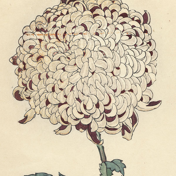 Gray and Red Chrysanthemum by Keika Hasegawa (active 1892 - 1905)