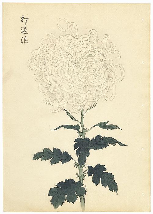 White Waves Chrysanthemum by Keika Hasegawa (active 1892 - 1905)
