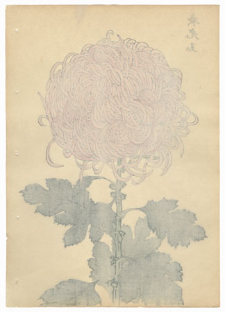 Golden Yellow Chrysanthemum by Keika Hasegawa (active 1892 - 1905)