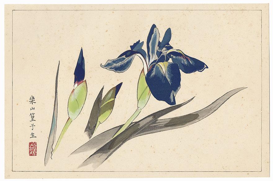 Rabbit-ear Iris by Rakusan Tsuchiya (1896 - 1976)