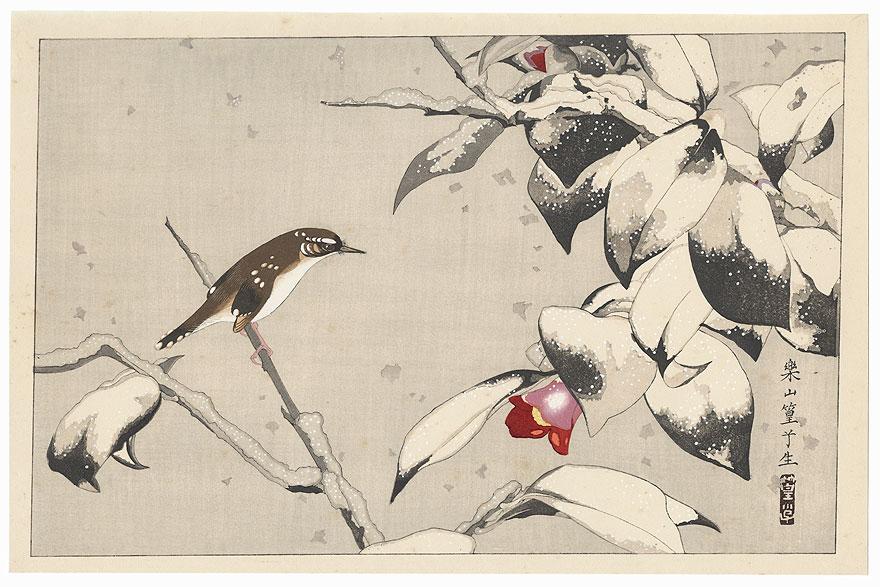 Wild Camellia and Short-tailed Bush Warbler in Snow by Rakusan Tsuchiya (1896 - 1976)