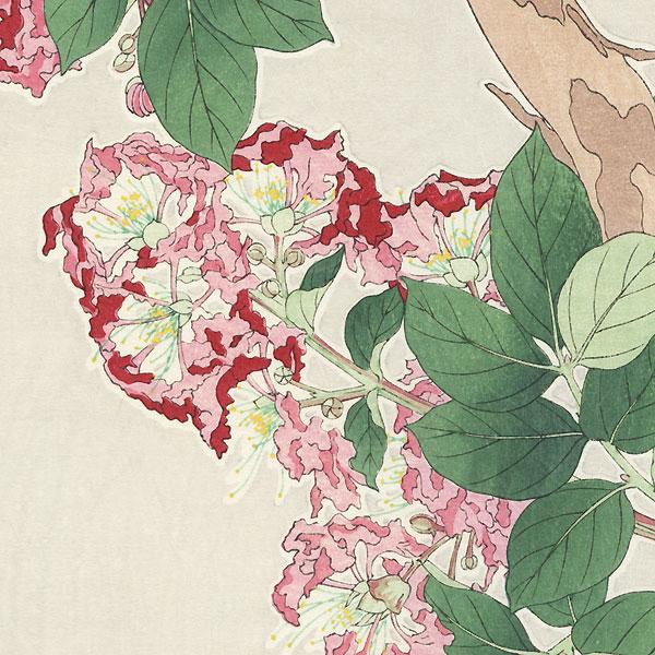 Crepe Myrtle by Kawarazaki Shodo (1889 - 1973)