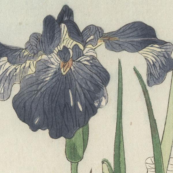 Irises by Shin-hanga & Modern artist (not read)