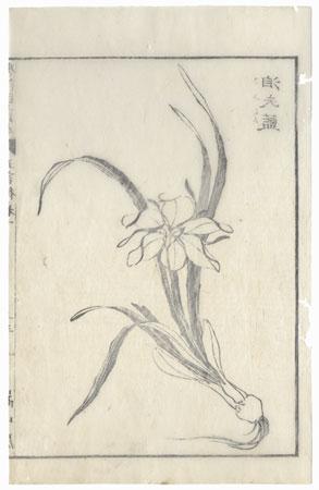 Daffodil, 1833 by Hokusai (1760 - 1849)