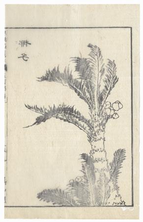 Palm, 1833 by Hokusai (1760 - 1849)