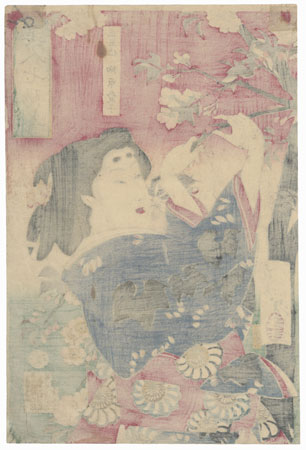 Beauty with Cherry Blossoms by Yoshitoshi (1839 - 1892)