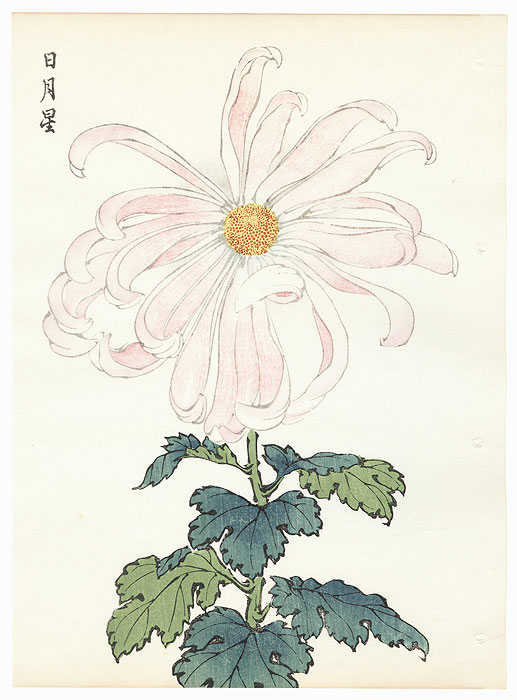 Sun, Moon, and Star Chrysanthemum by Keika Hasegawa (active 1892 - 1905)