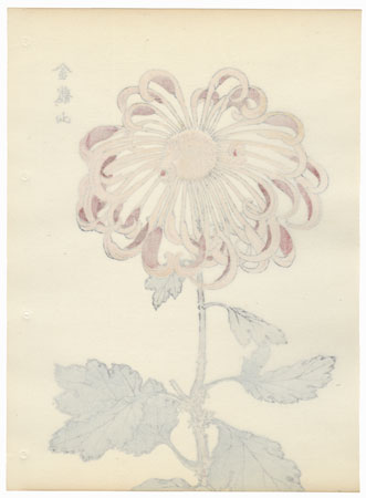 Mount Golden Dragon Chrysanthemum by Keika Hasegawa (active 1892 - 1905)