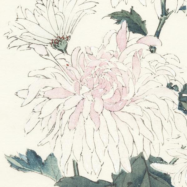 Chinese Lion Chrysanthemum by Keika Hasegawa (active 1892 - 1905)