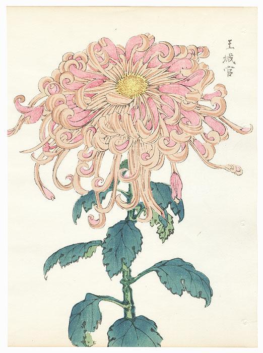 Palace Chamberlain Chrysanthemum by Keika Hasegawa (active 1892 - 1905)