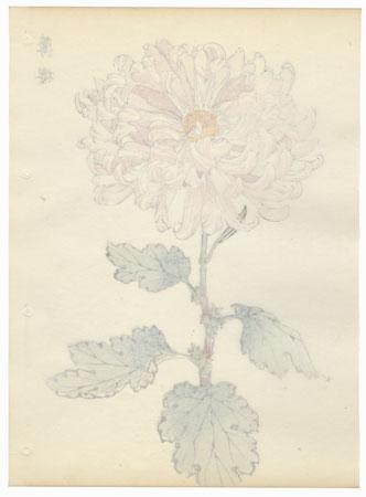 Pale Cherry Blossoms Chrysanthemum by Keika Hasegawa (active 1892 - 1905)