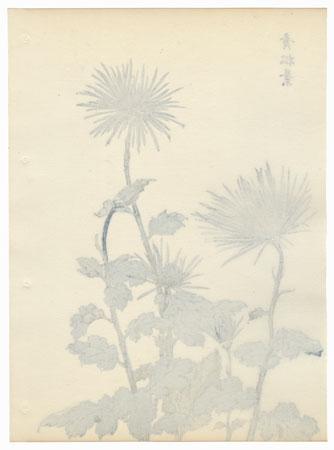 Blue Pine Needles Chrysanthemum by Keika Hasegawa (active 1892 - 1905)