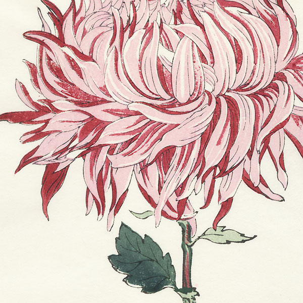 Pink and Red Chrysanthemum by Keika Hasegawa (active 1892 - 1905)