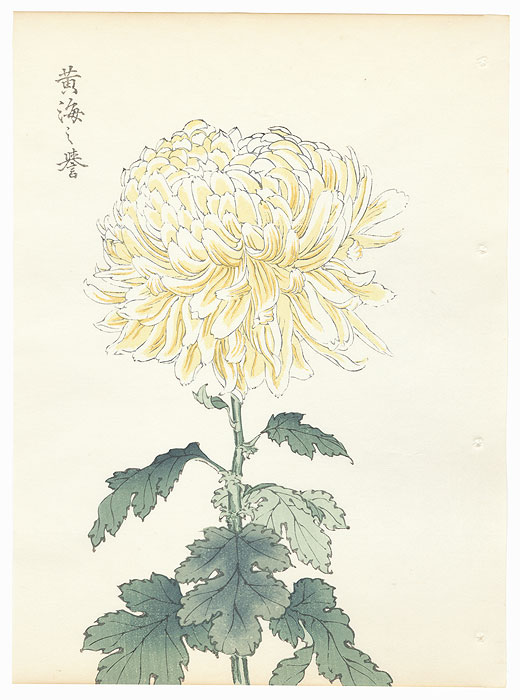 Yellow Chrysanthemum by Keika Hasegawa (active 1892 - 1905)