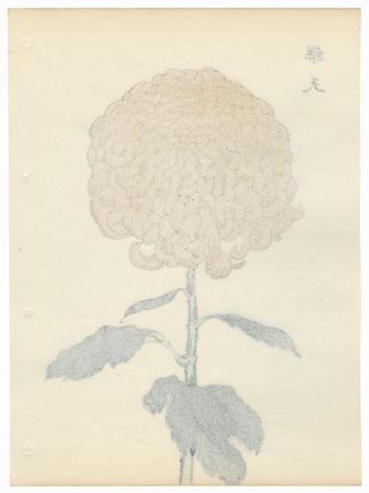 Heaven Chrysanthemum by Keika Hasegawa (active 1892 - 1905)