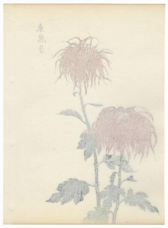 Azuma Kanoko Chrysanthemum by Keika Hasegawa (active 1892 - 1905)