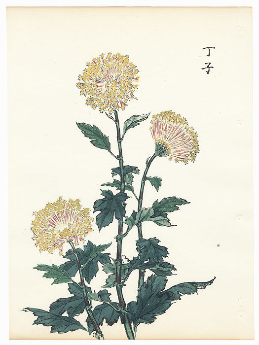 Small Leaf Chrysanthemum by Keika Hasegawa (active 1892 - 1905)