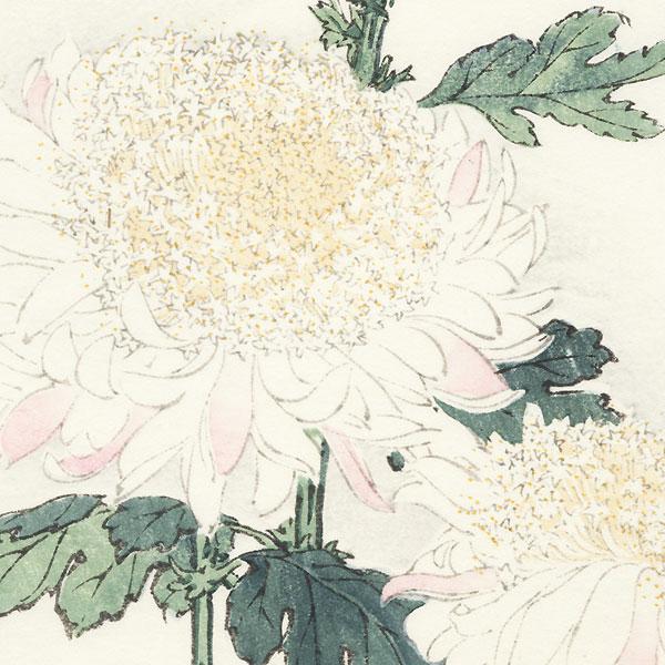 White Chrysanthemums by Keika Hasegawa (active 1892 - 1905)