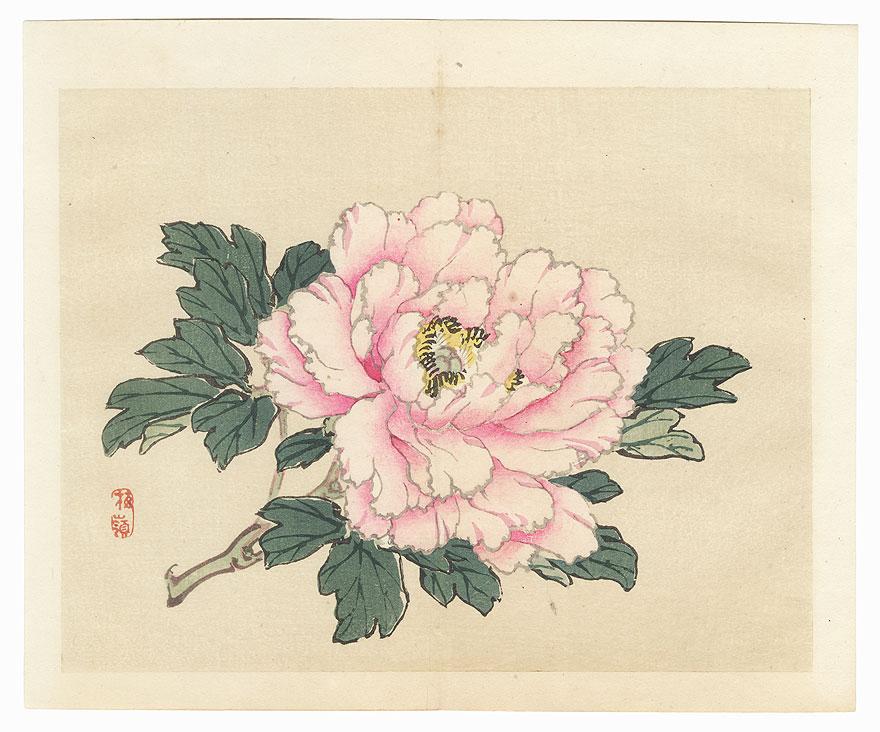 Peony by Bairei (1844 - 1895)