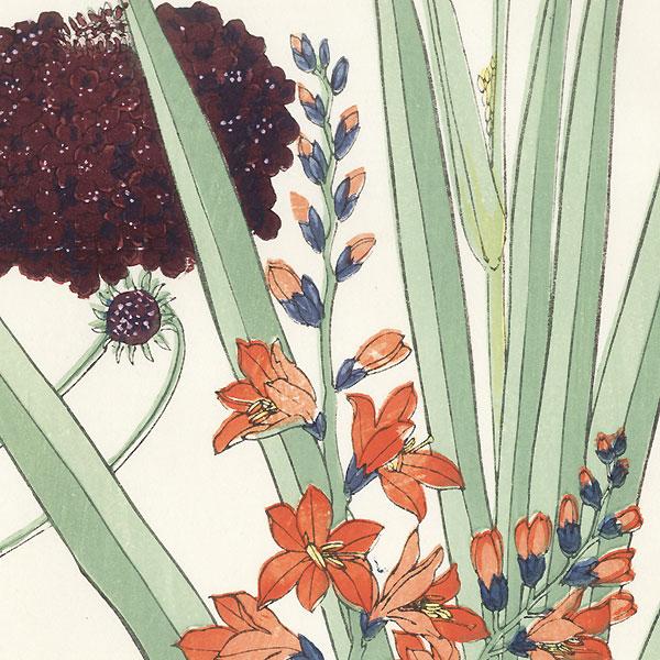 Montbretia and Scabiosa by Tanigami Konan (1879 - 1928)