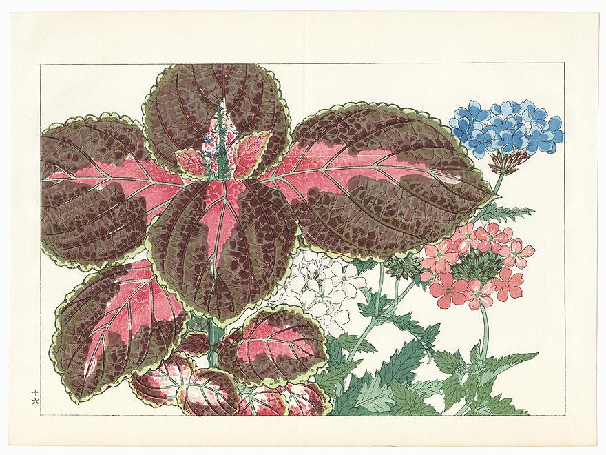 Verbena and Coleus by Tanigami Konan (1879 - 1928)