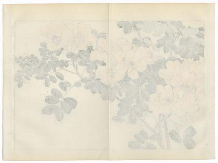 Allamanda by Tanigami Konan (1879 - 1928)