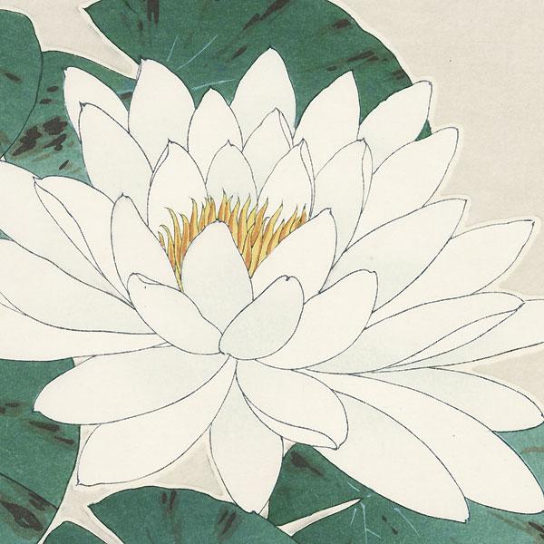 Waterlily by Kawarazaki Shodo (1889 - 1973)