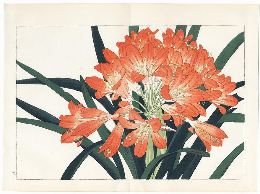 Clivia Miniata by Tanigami Konan (1879 - 1928)