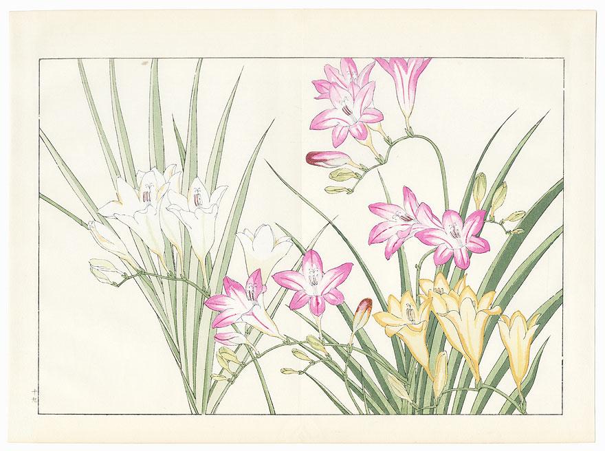 Freesia by Tanigami Konan (1879 - 1928)