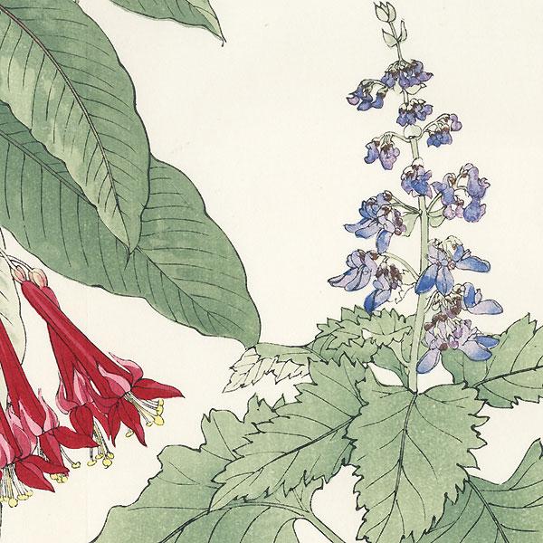 Coleus and Fuchsia by Tanigami Konan (1879 - 1928)