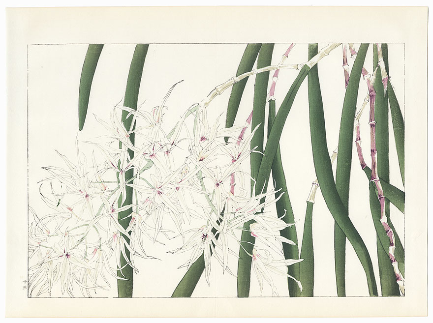 Orchid from Oya by Tanigami Konan (1879 - 1928)