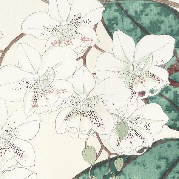 Laelia by Tanigami Konan (1879 - 1928)