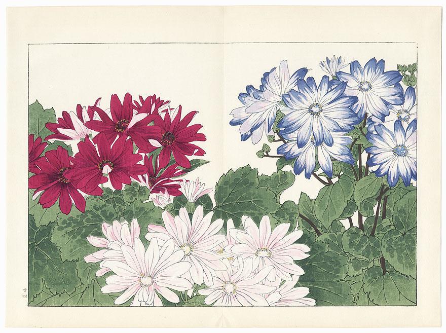 Cineraria by Tanigami Konan (1879 - 1928)