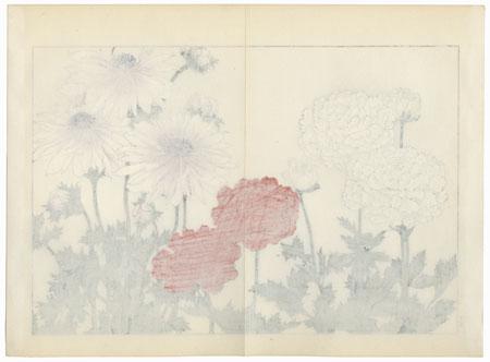 Anemone by Tanigami Konan (1879 - 1928)